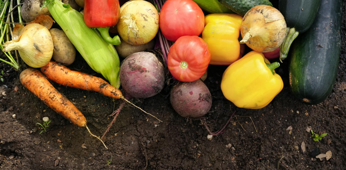 soil and vegetable image