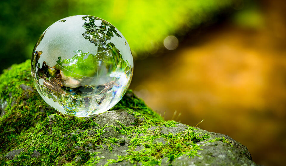 Rain drop sitting on a moss covered rock reflecting the green of the moss in the bubble
