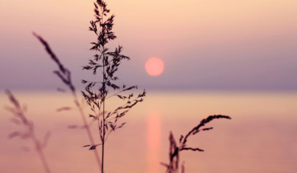Little grass stem close-up with sunset over calm sea, sun going down over horizon. Pink & purple pastel watercolor soft tones. B